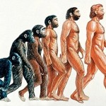 Evolution of the Human Being